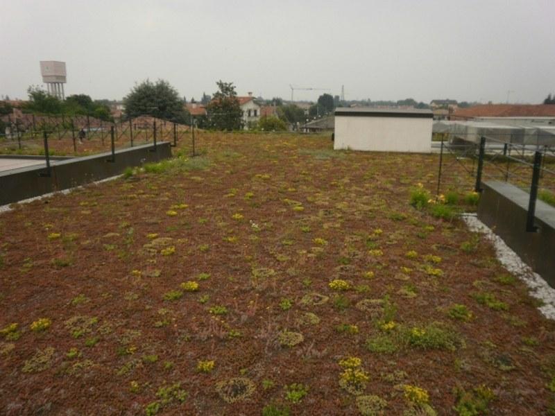 Casa di Riposo di Cartigliano, impermeabilizzazione e tetto verde